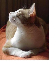Ode ao Gato onde há o ódio ao Gato