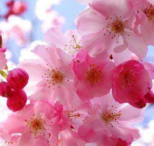 A maravilhosa energia vibracional das Flores