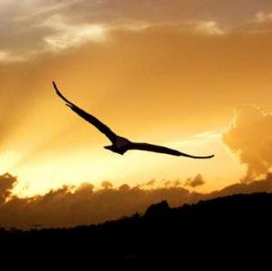 El vuelo del alma