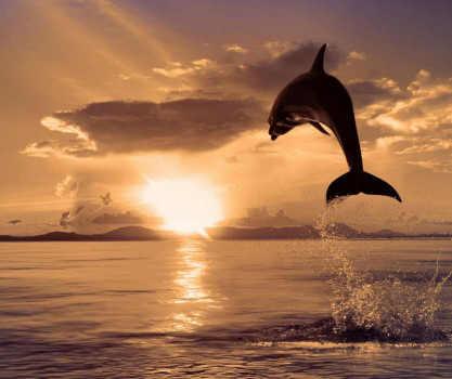 O Ano Solar está terminando: o Sol transita no signo de Peixes