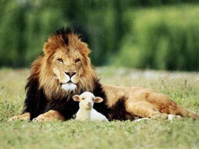 Você é um leão ou um carneiro?