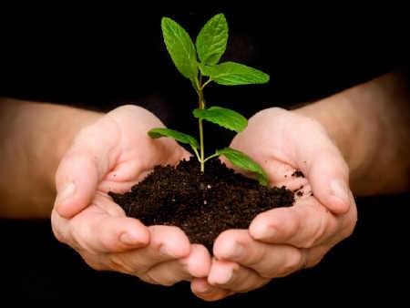 ¿Cultivas tú la paz?