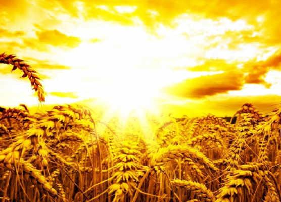 2019: El año de la Abundancia Espiritual