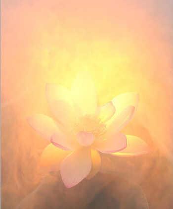 Técnica de visualização das flores espirituais