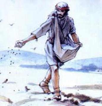 A semeadura é livre mas a colheita é obrigatória