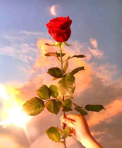O sol, a flor e os devas, tudo vibra!