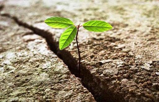 A resiliência pode ajudá-lo a superar a crise