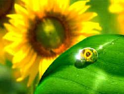 O Perdão e as Essências Florais
