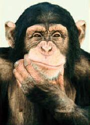 El collar de perlas y el mono