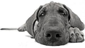 O Sacrifício do cãozinho, uma missão de luz