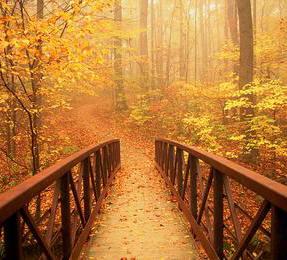 Conocer y andar el Camino