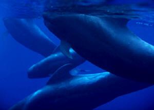 A mulher nua, a menopausa e os golfinhos