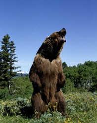 Tempo de inverno - Tempos de `ser´ urso