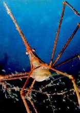 Câncer, o despertar do caranguejo