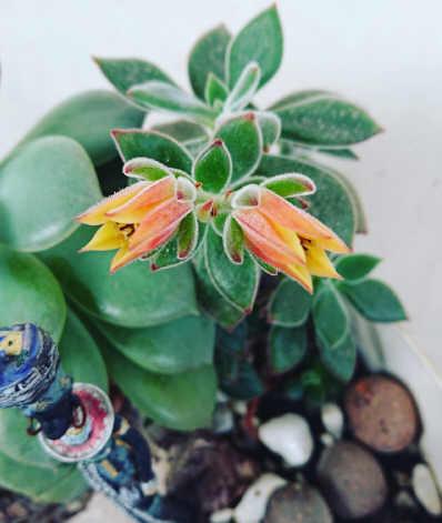Pratique a consideração e a bondade até ser como a linda flor que todos adoram ver.... veja mais.