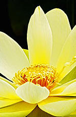 Stress e Terapia Floral, uma Parceria de Sucesso