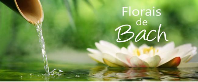 De la serie Terapias Holísticas: Florales de Bach – parte 2